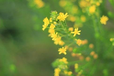 この小花は