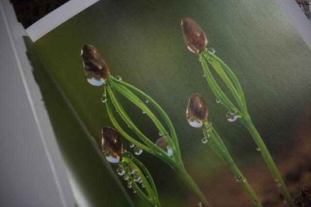 埴 沙萠さんの『植物記』-02
