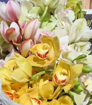 北崎の花 (4)