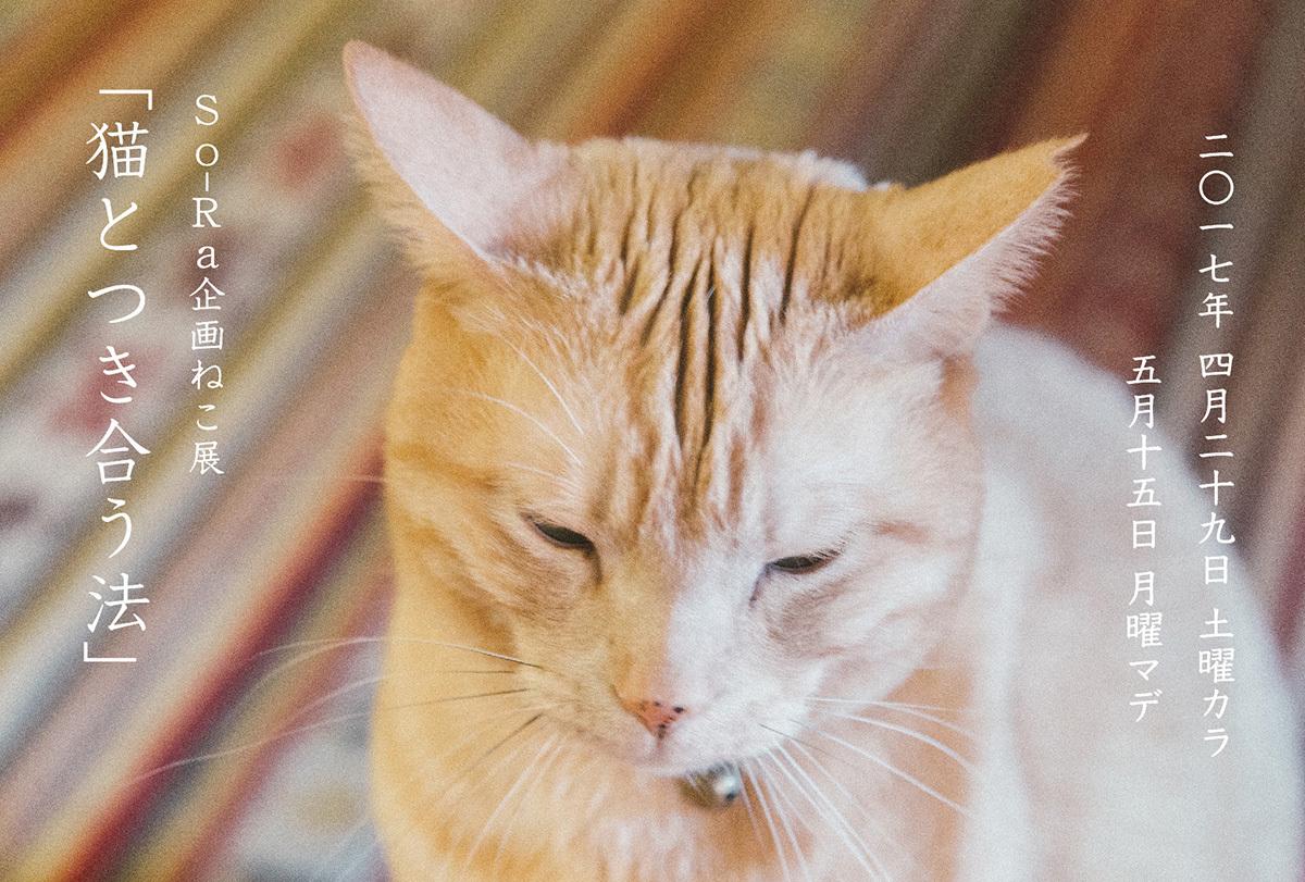 猫とつき合う法