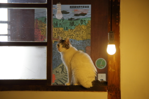 窓のチャコ