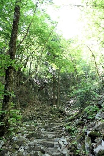 船通山の登山道