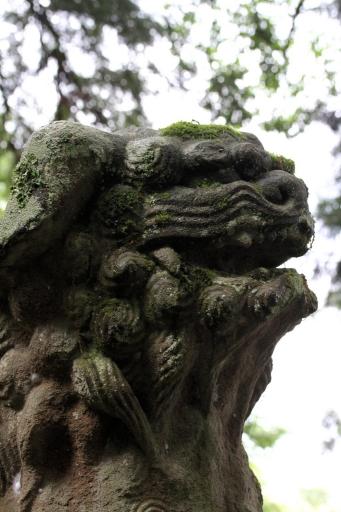 大井神社の狛ワンコ