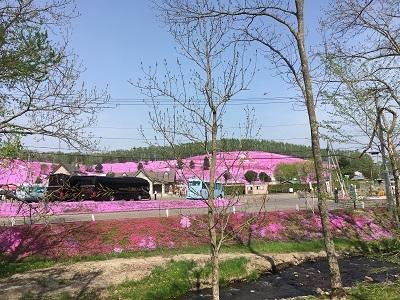 20170520 東藻琴 芝桜公園