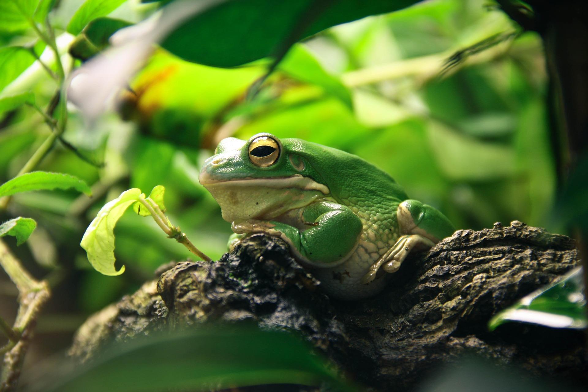 frog-663966_1920.jpg