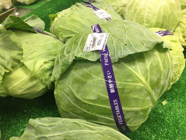170625_cabbage-1.jpg