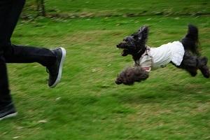 飛行犬初級1