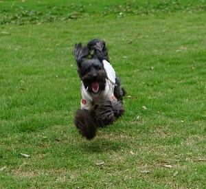 飛行犬初級2