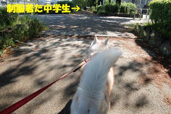 170511 散歩05