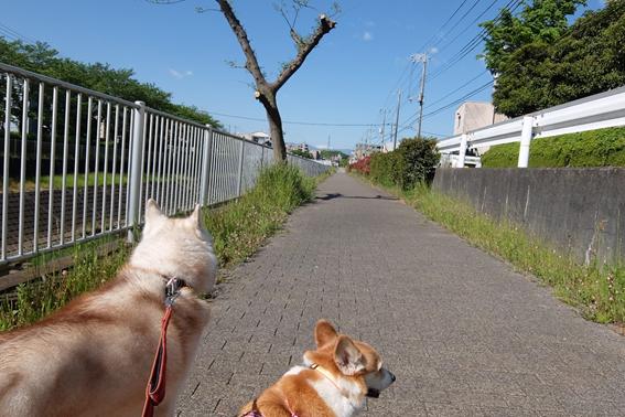 170511 散歩07