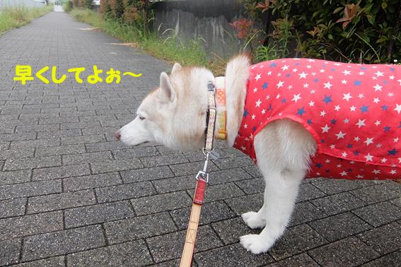 170526 雨07