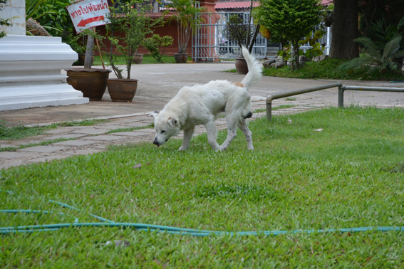 170703 犬16