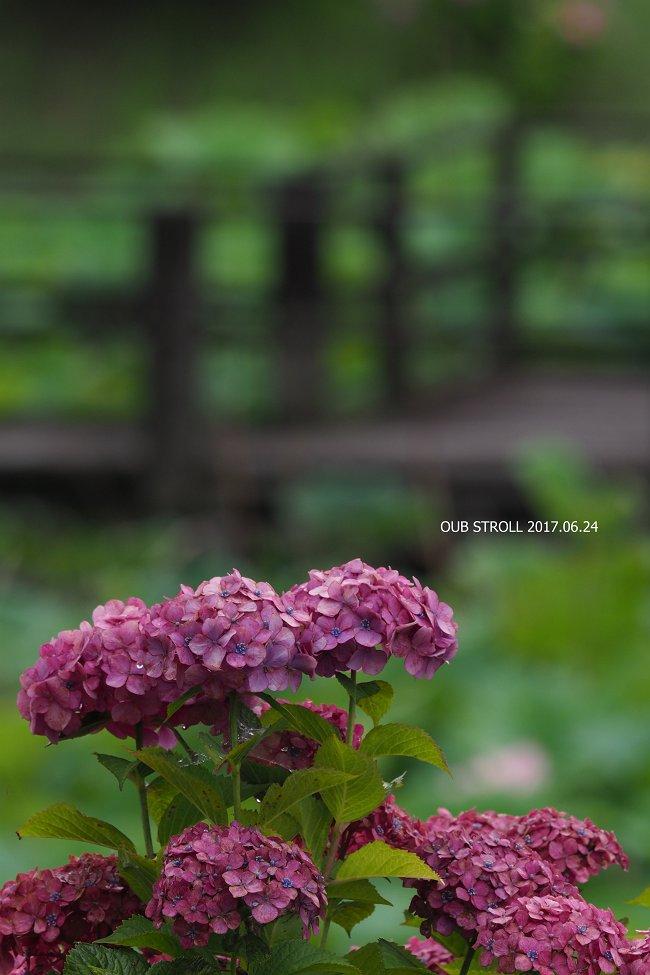 E6251565_s.jpg