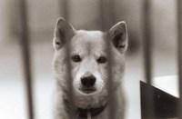 ラストポートレート 犬