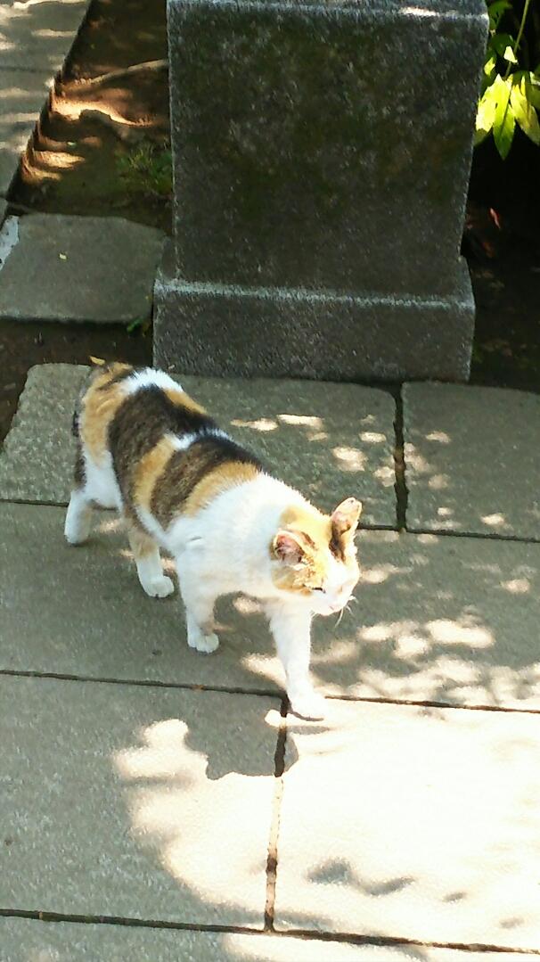神社の猫さん