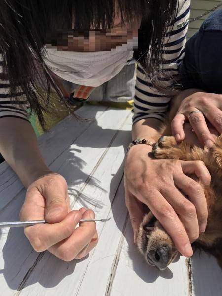 愛犬モンベル_170508_0012