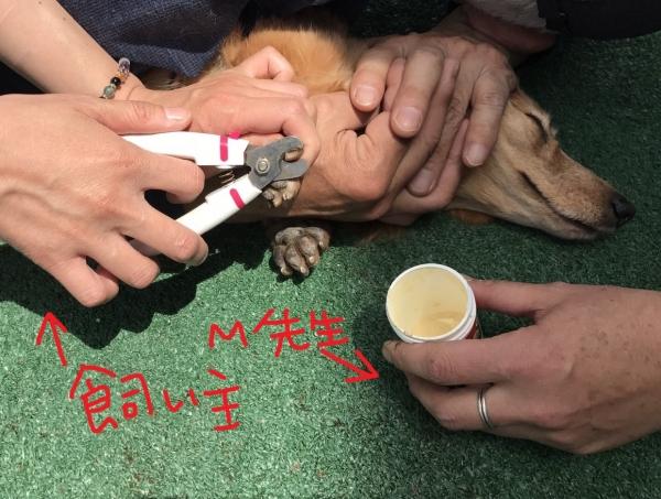 愛犬モンベル_170508_0006