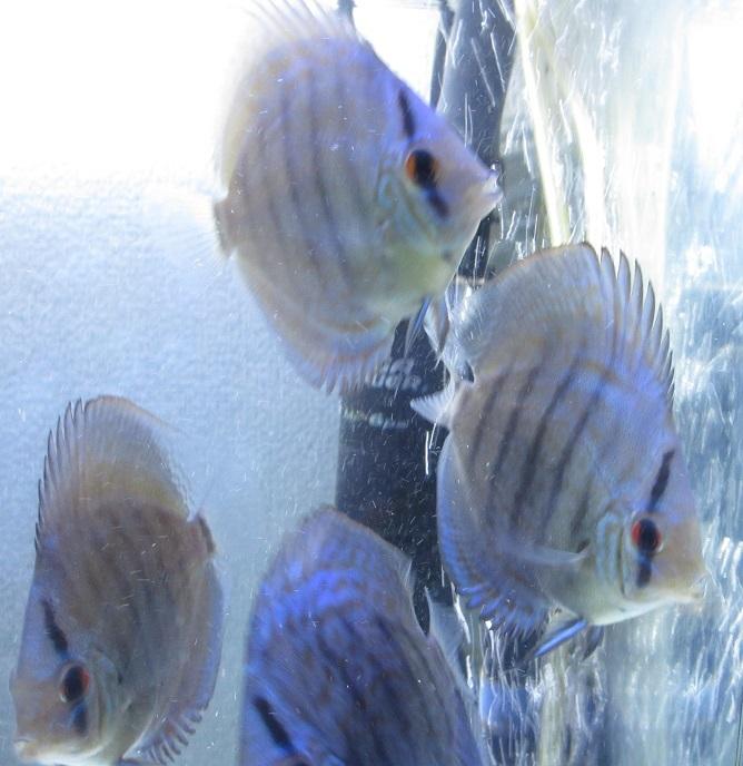新BiJWS若魚になりつつ有ります2
