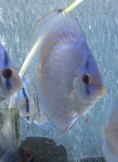 新Bi JWS若魚5