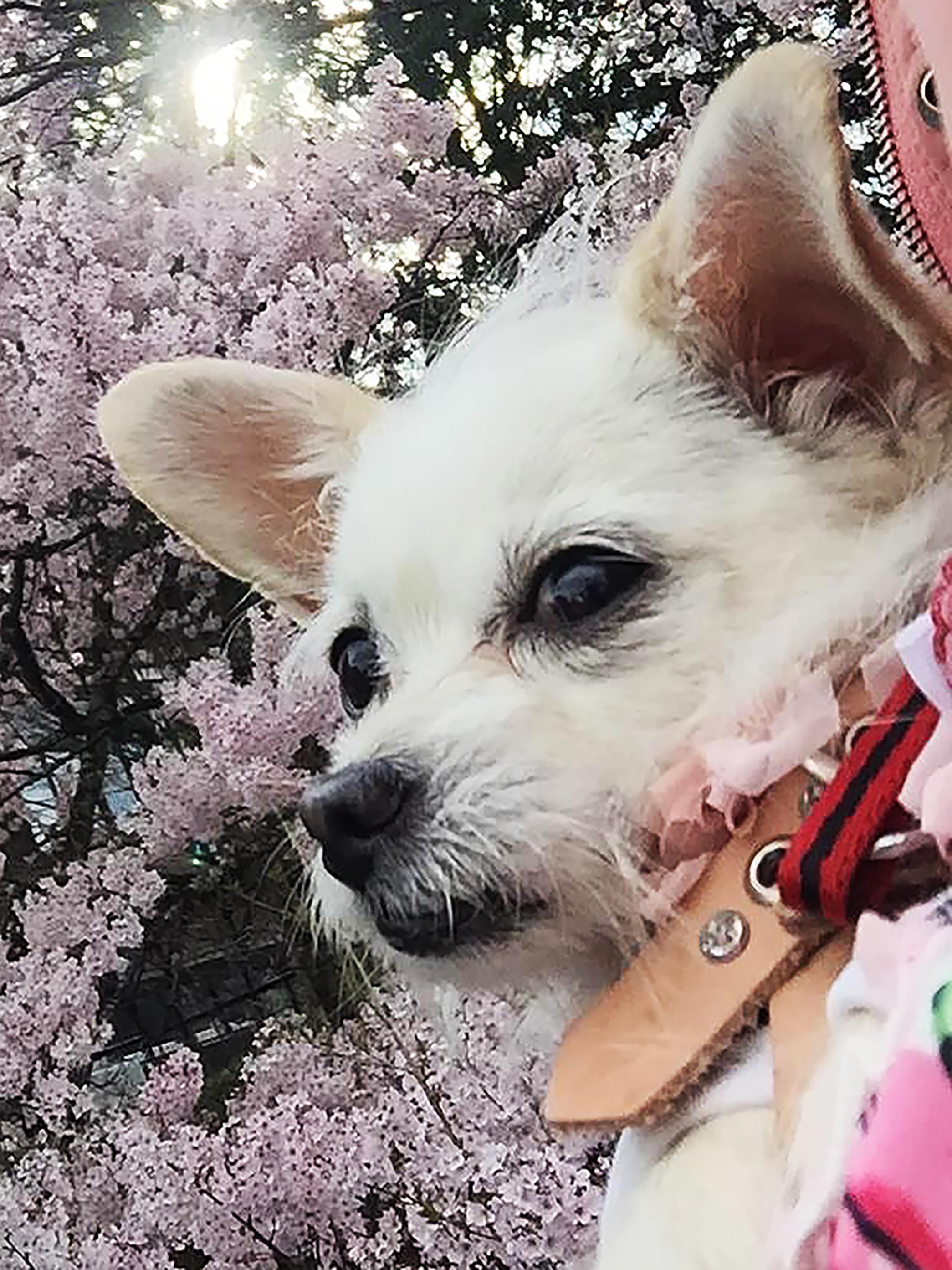 1704高遠桜とこゆ