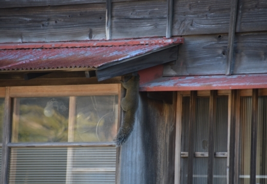170121-144121-鎌倉20170121 (120)_R
