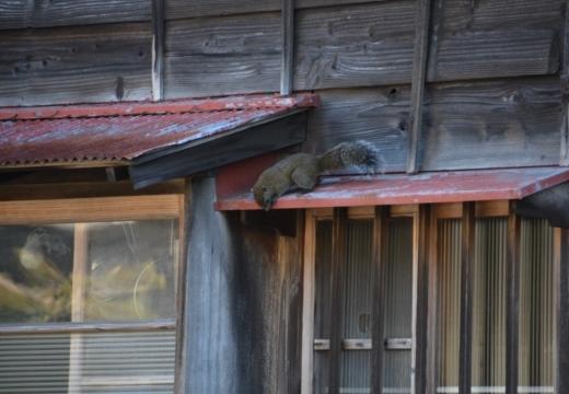 170121-144135-鎌倉20170121 (127)_R