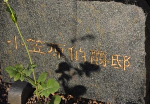 170612-184205-小笠原邸20170612 (23)_R