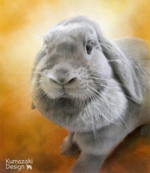 ペット肖像画 ペットの絵 ペット画 似顔絵 イラスト うさぎ 兎 色えんぴつ画 色鉛筆画