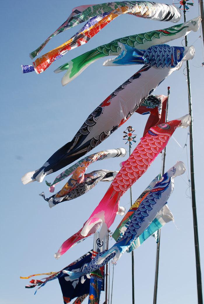 鯉のぼり-2
