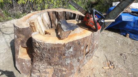 大きな木の株と格闘
