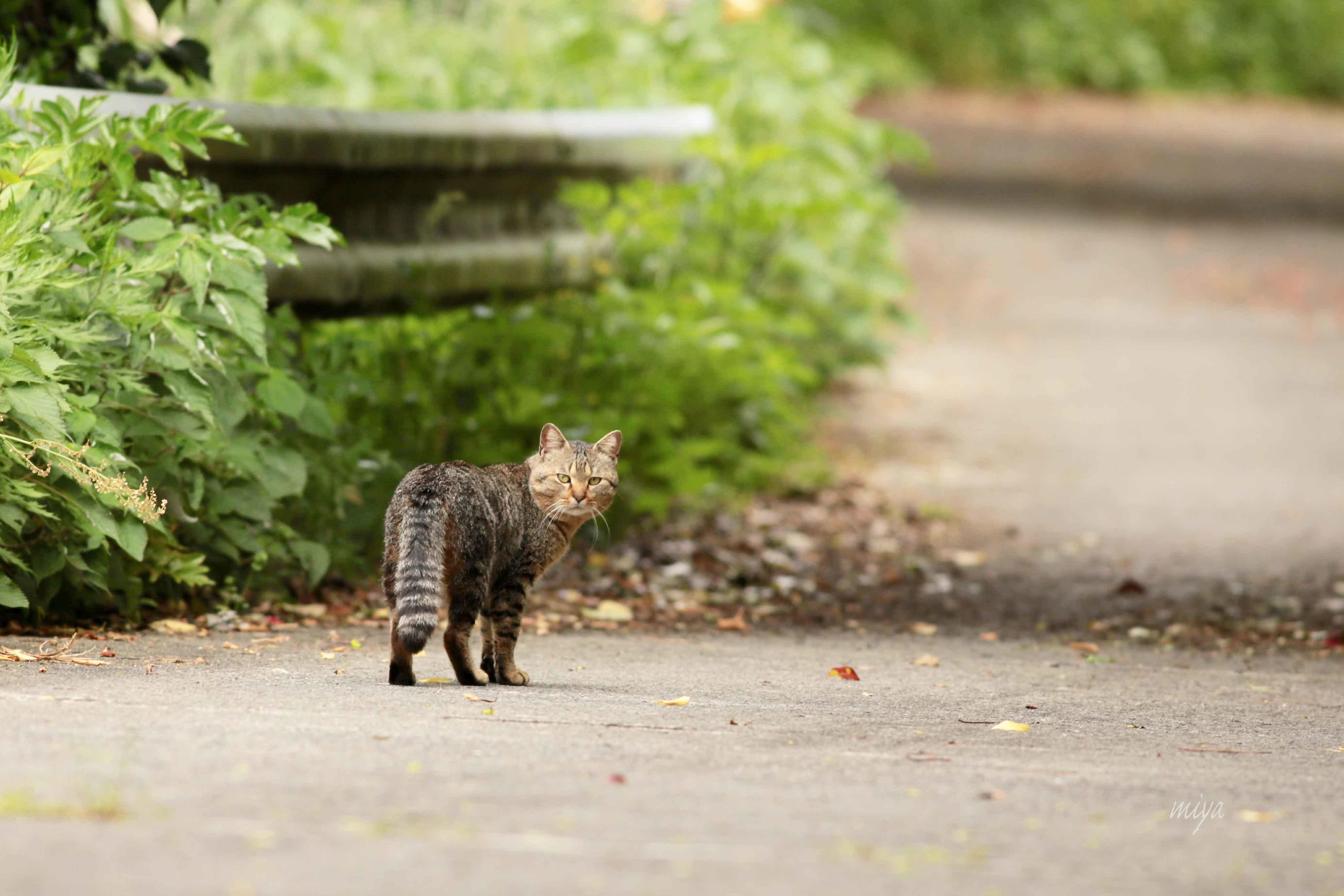 猫さんさくm032A8767