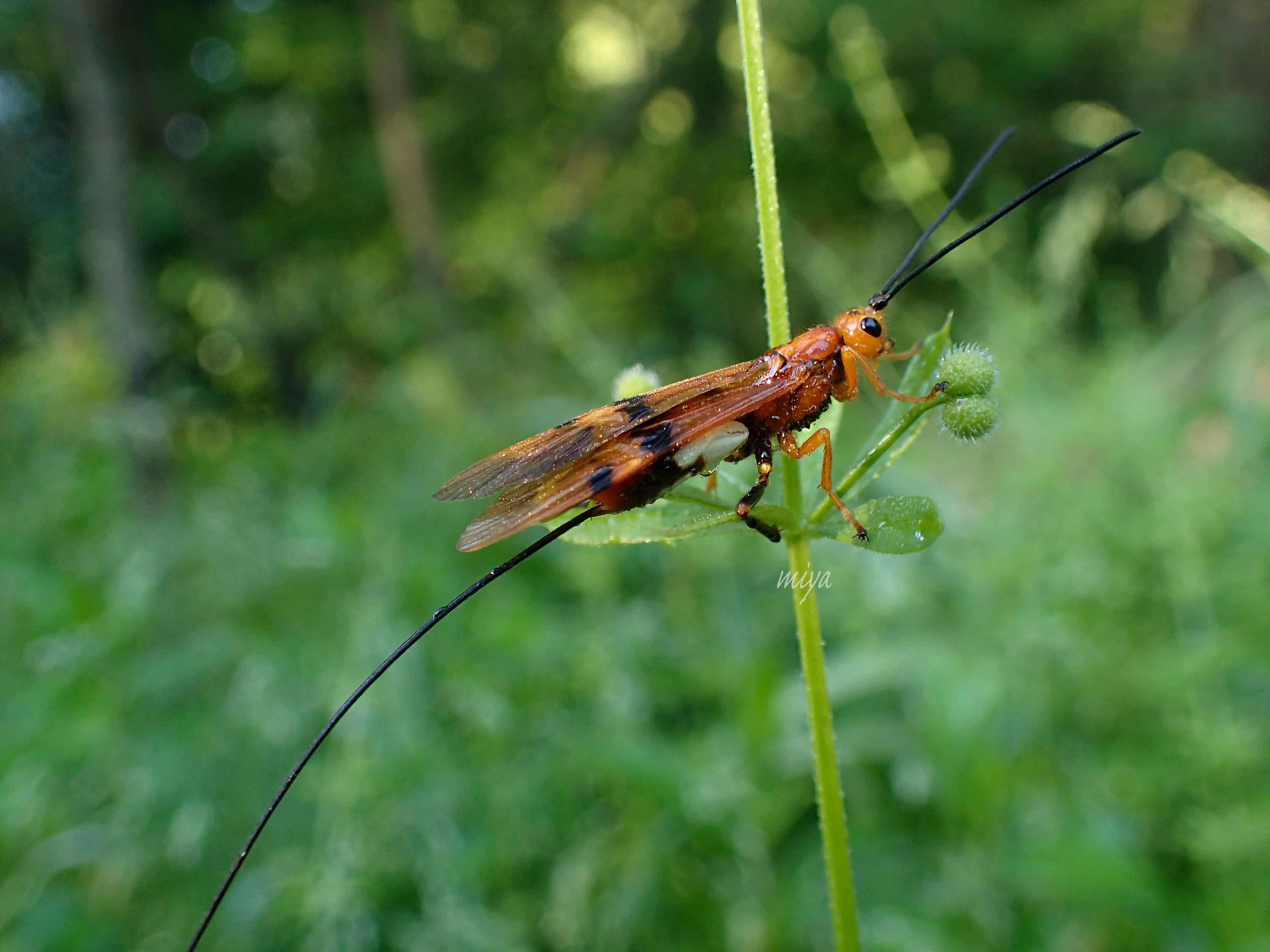 うまの雄蜂横mP5180252
