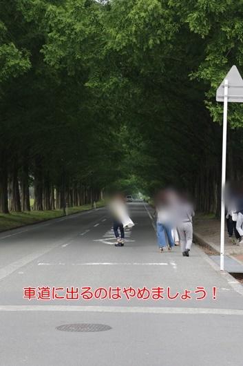 3V9A9216.jpg