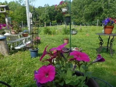 花満開、わが家の庭