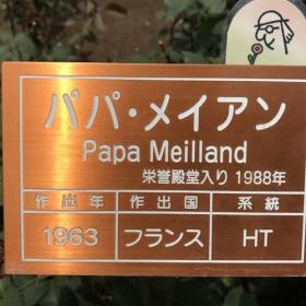 20170608_papa_meilland_n.jpg