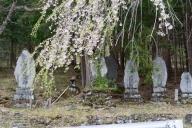 御嶽神社の石塔と枝垂れ桜