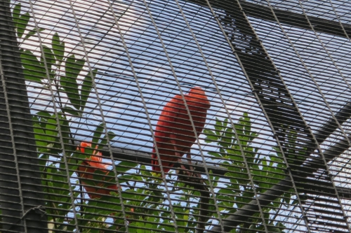 Honolulu Zoo (19)