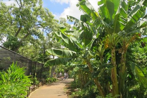 Honolulu Zoo (20)