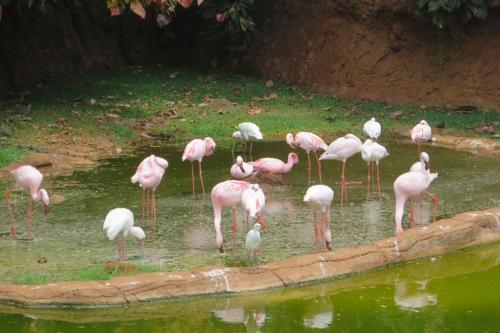 Honolulu Zoo (44)