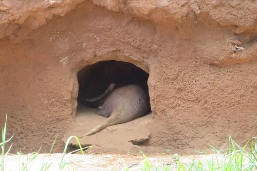 Honolulu Zoo (46)