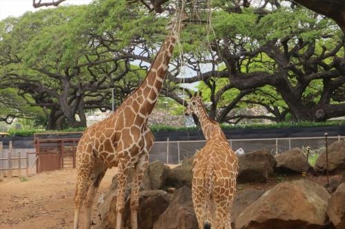 Honolulu Zoo (49)