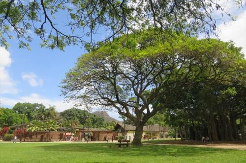 Honolulu Zoo (83)