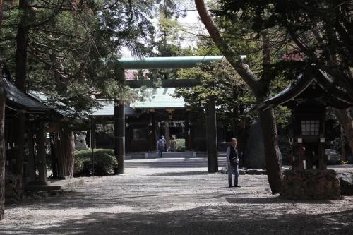 201705 琴似神社桜 (7)_R