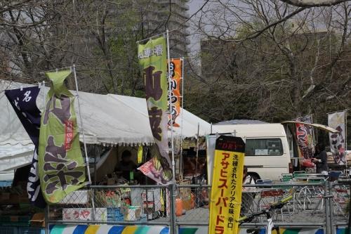 201705 札幌護国神社桜 (61)_R