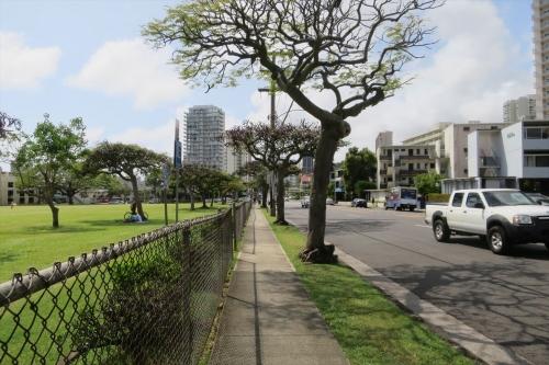ハワイ大学マノア校 (5)_R