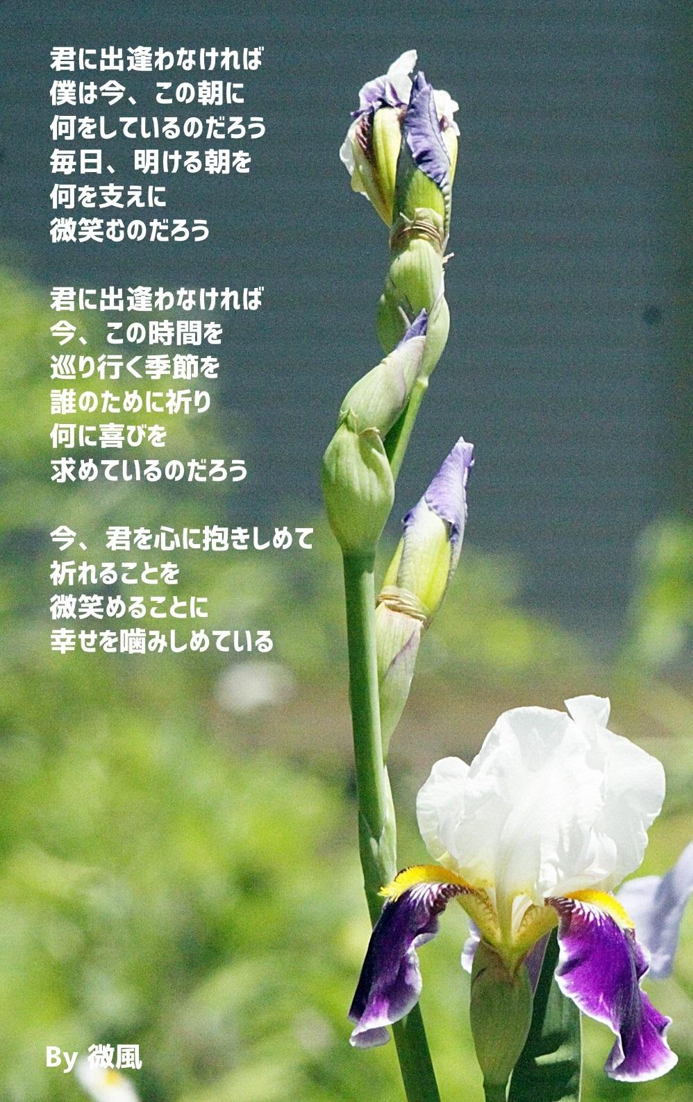 2017-05-20-b.jpg