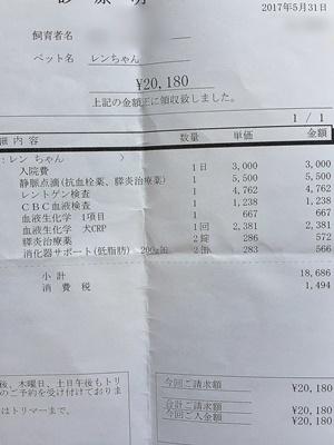 2017 5 31 明細