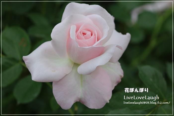 IMG_3280YEG5-03.jpg