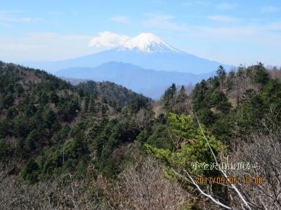 小金山から冨士山