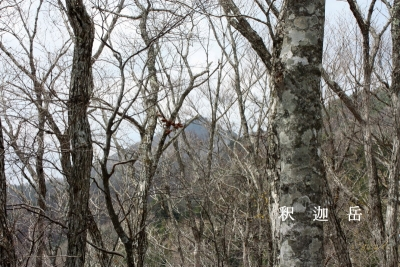 樹間から釈迦ケ岳